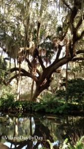 Washington Oaks Gardens State Park -5- VilanoDayByDay